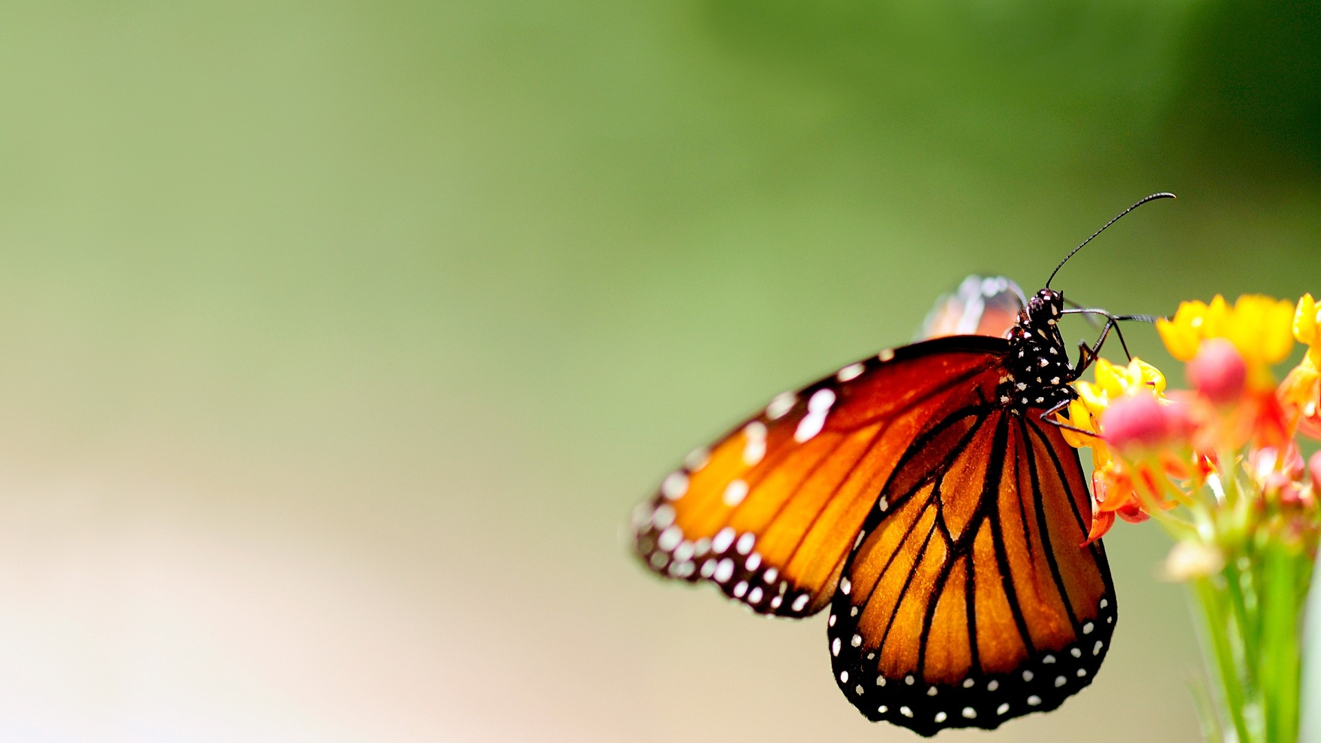6930751-butterfly-background